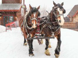 snowed-inn-sleigh-co-park-city