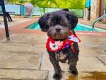 A Park City Pet Tribute