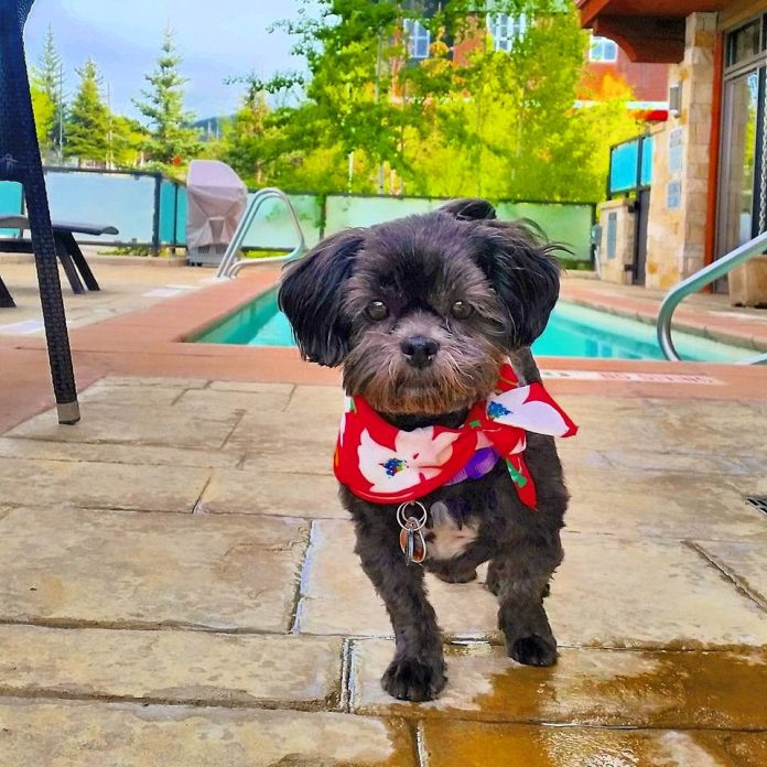 Pets in Park City